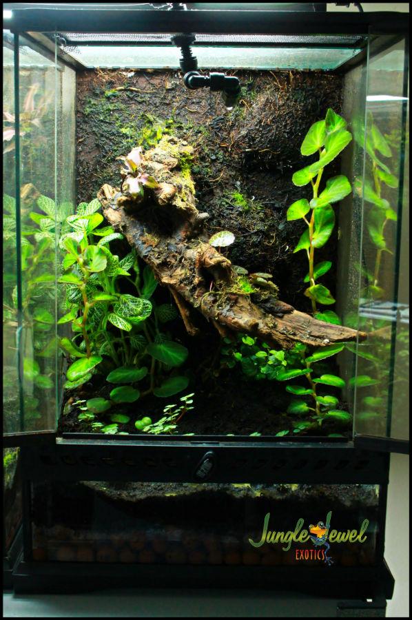 Small Prebuilt Vivarium 6 Jungle Jewel Exotics