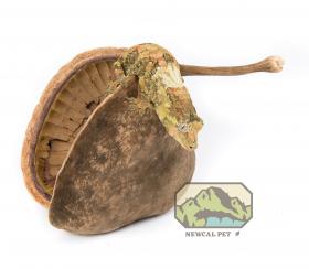 Buddha Nut XL