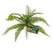 Artificial Plastic Fake Fern Plant for a Terrarium or Vivarium
