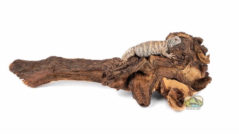 NewCal Mopani Wood